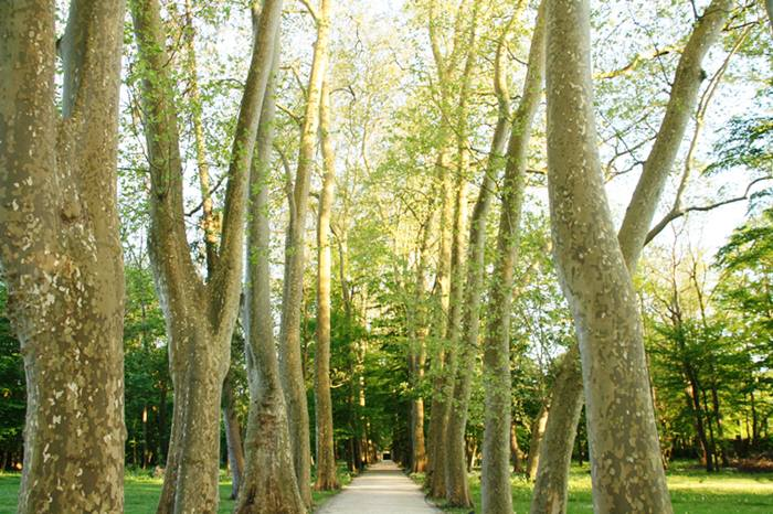 Parque árboles. Casona de Las Fraguas Cantabria