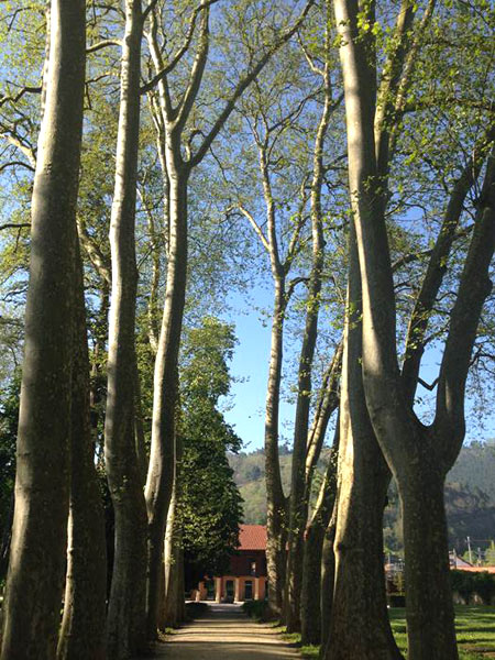 Jardines con árboles centenarios