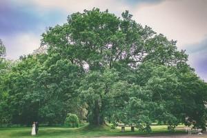 reportaje de fotos en jardines exteriores